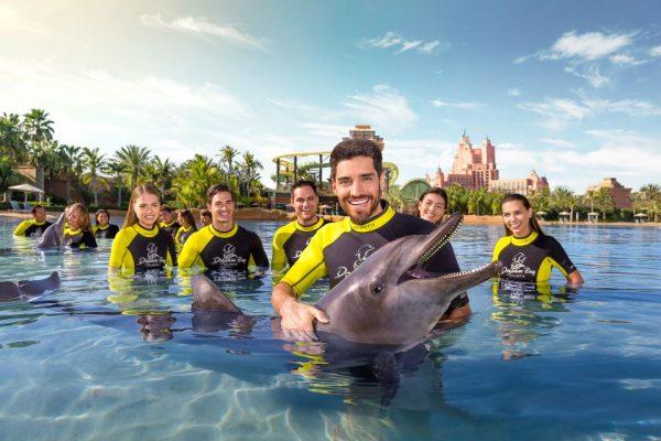 dauphins dubai